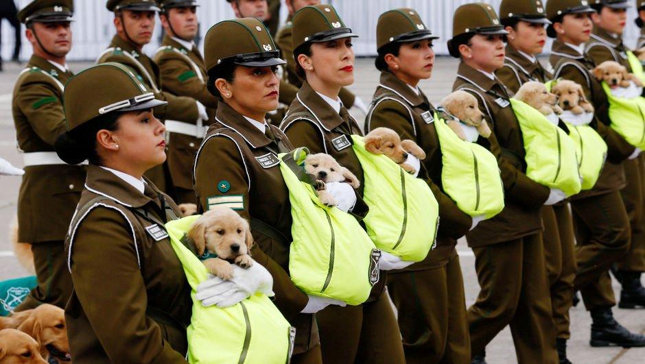 Geleceğin polis köpekleri kucakta taşındı