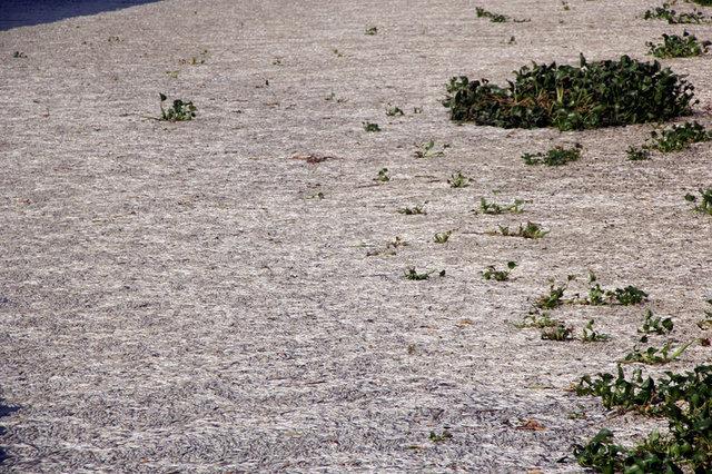 On binlerce balık Samandağ Denizine ulaşamadan telef oldu