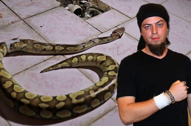 Aref piton yılan