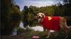 Kanser hastası köpeklerinin son arzularını gerçekleştiren çift