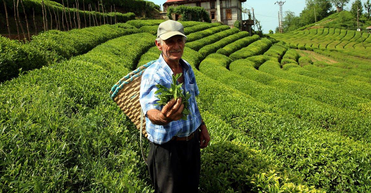 agrotime gübre çay ile ilgili görsel sonucu