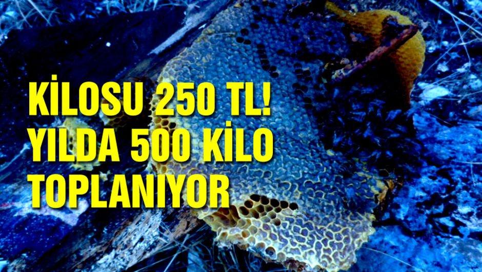Kilosu 250 TL! Yılda 500 kilo toplanıyor