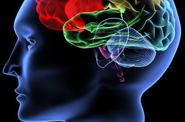 İTÜ'lü bilim insanlarının Alzheimer araştırmaları bilimsel makalelere konu edildi
