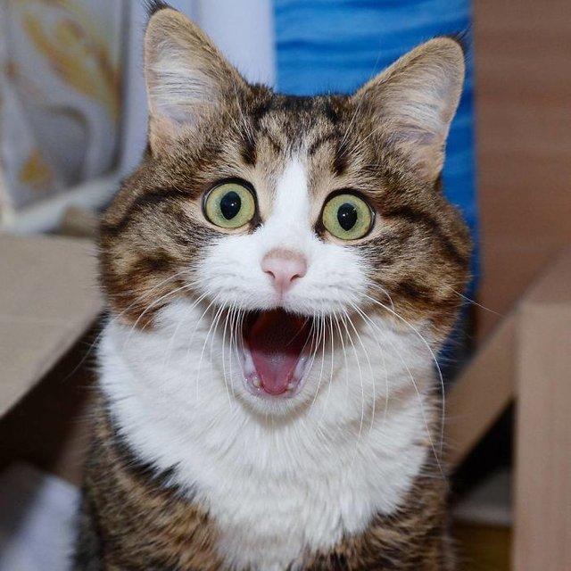 En çok kedi hangi ülkede besleniyor? En çok kedi besleyen 15 ülke!