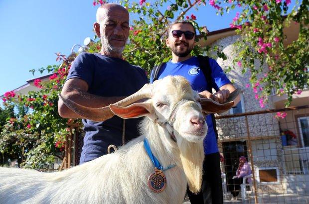 Muğla keçi
