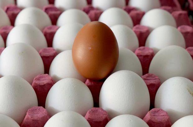 Yumurta ihracatı