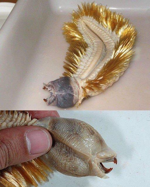 Muhtemelen daha önce görmediğiniz ilginç deniz canlıları