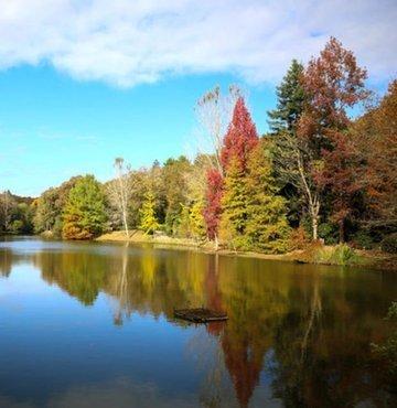 Dünyada türünün en büyük örnekleri arasında yer alan ve yaklaşık 2 bin ender bitki türünün yer aldığı Atatürk Arboretumu, her mevsim olduğu gibi sonbaharda da yoğun ilgi görüyor