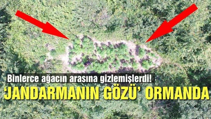 Jandarmanın gözü ormanda!