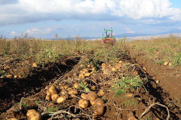 Ahlat patatesinden 160 milyon liralık gelir hedefi