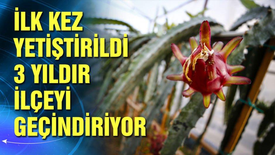 Türkiye'nin ilk tropikal meyvesine tescil