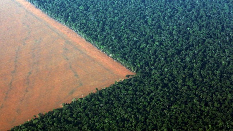 Amazon ormanlarında son 10 yılın en büyük kaybı: 7 bin 900 kilometrekarelik alan tahrip edildi