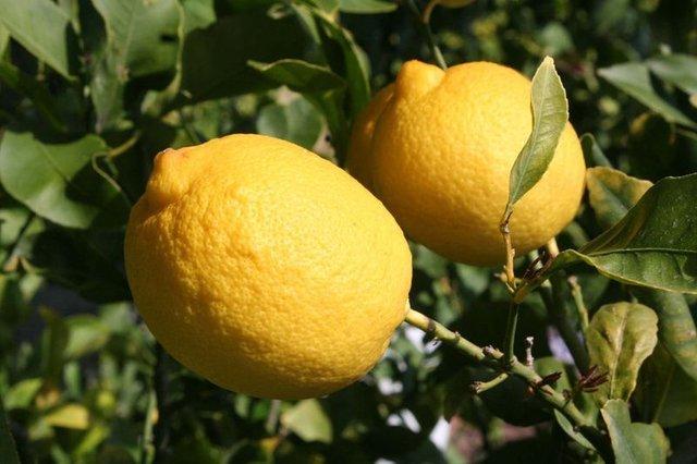 İşte limonlu su içmenin mucizevi faydaları!