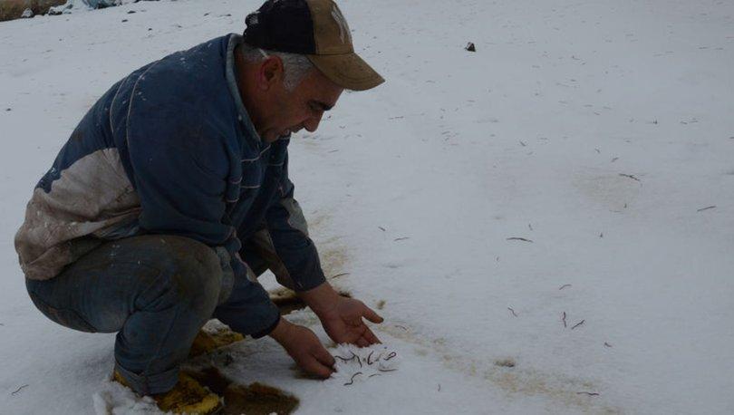 Kars'ta kar üzerindeki solucanlar şaşırttı