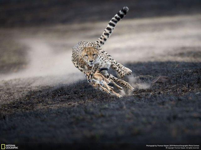 National Geographic, 2018'in en iyi fotoğraflarını paylaştı