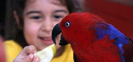 Müdür okulda 'kuş parkı' oluşturdu