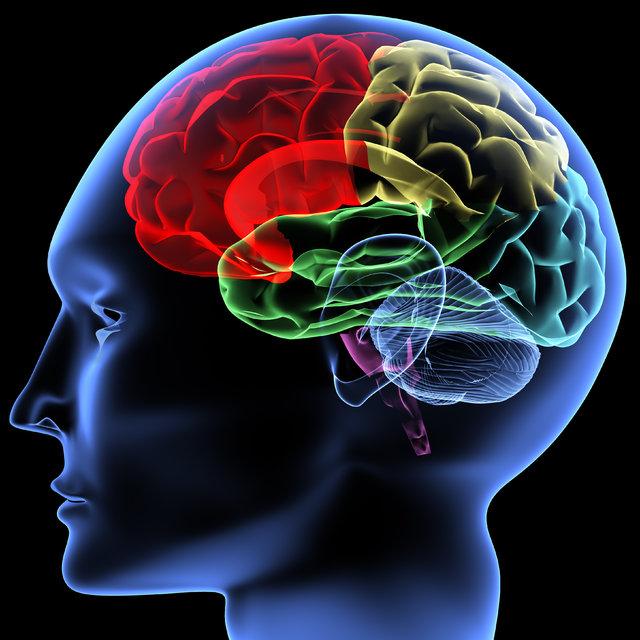 Güçlü bir hafıza için beyin dostu besinler