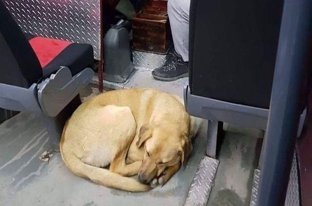 Soğuktan aracına sığınan köpeğe kıyamadı