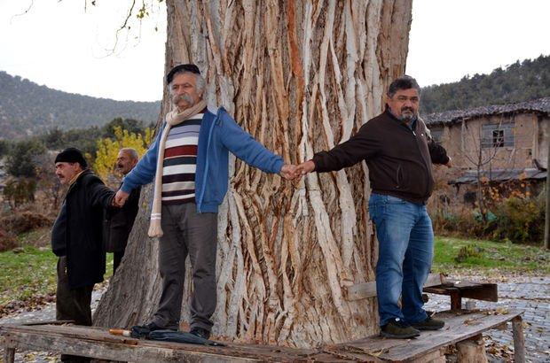 anıt ağaç