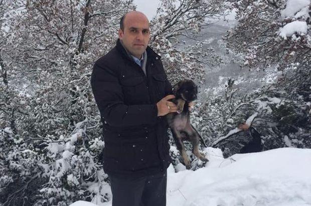 köpek yavruları Kaymakam Çanakkale Biga