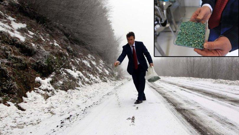buz ve karı eriten buzyak