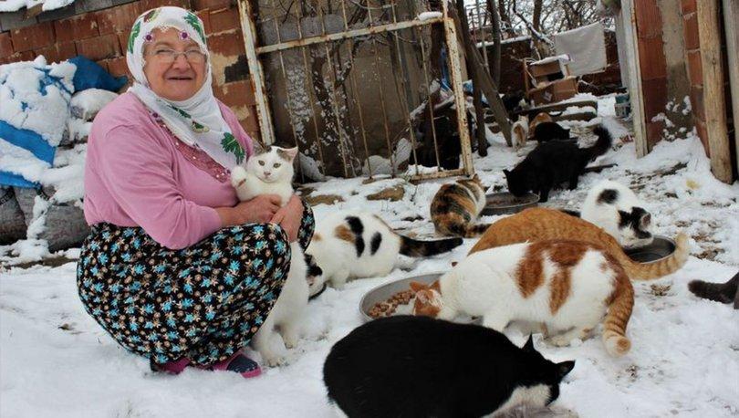 hayvanseverin kedi duyarlılığı