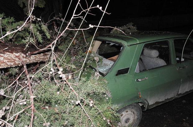Fırtına ağaçları devirdi, elektrik tellerini kopardı