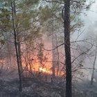 Osmaniye'de 2 hektar kızılçam ormanı kül oldu
