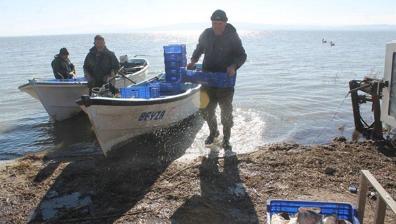 Manyas gölü sazan balığı