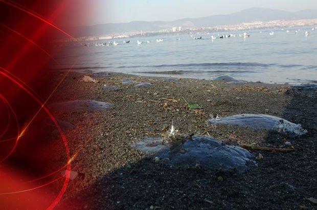 denizanaları kıyıya vurdu