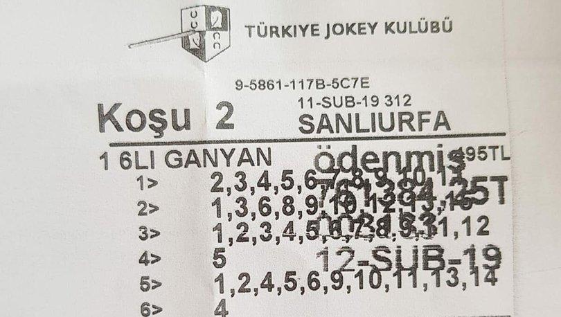 at yarışı