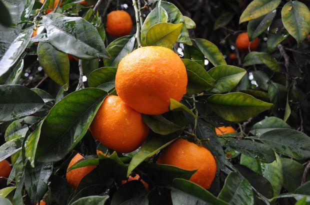 Yaş Meyve Sebze İhracat