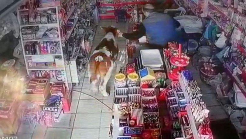 Dana markete girince market sahibi neye uğradığını şaşırdı
