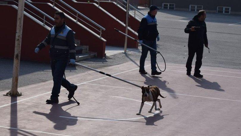 Çorum'da okula giren pitbull öğrencilere saldırdı