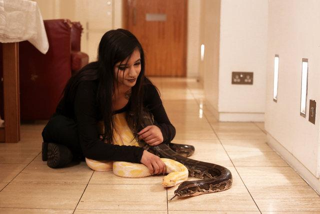 Koynunda 16 tane yılan besliyor! Sıra dışı evcil hayvanlar