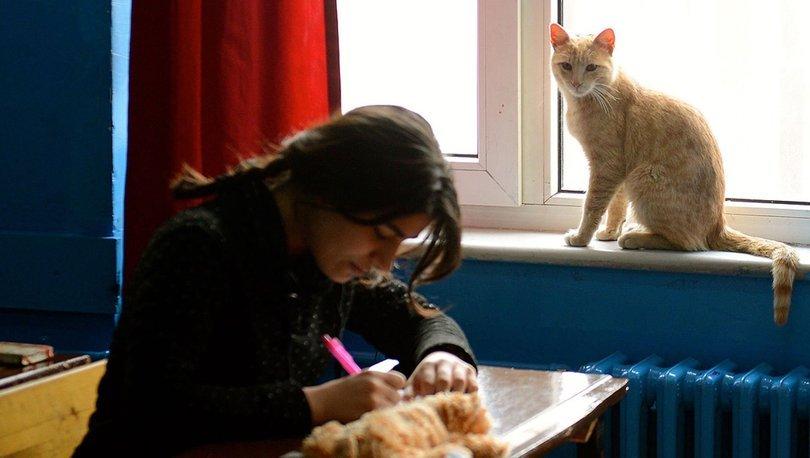 Bu kedinin sahibi 623 öğrenci