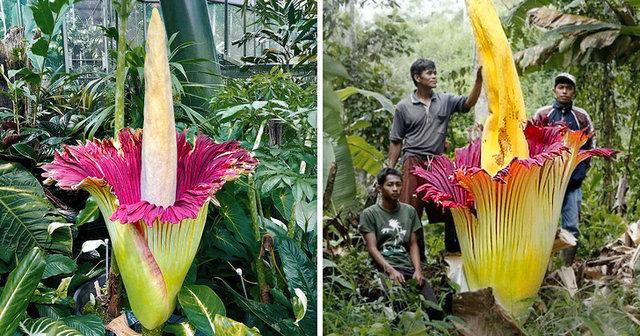 Birbirinden tuhaf bitkiler