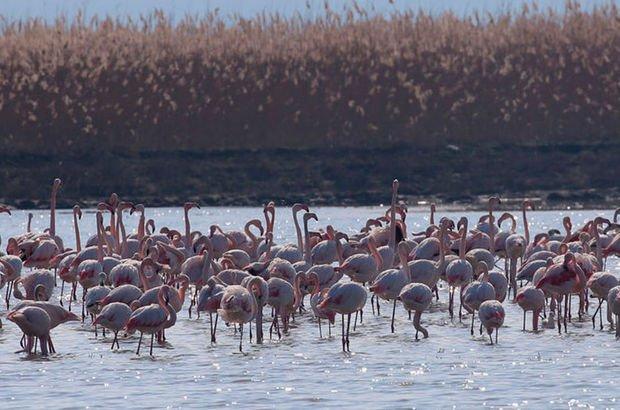 Trakya'nın kuş cenneti