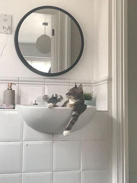 Kedilerin her yerde uyuyabileceğini kanıtlayan komik fotoğraflar