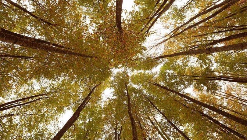 fransa ile ormancılık anlaşması
