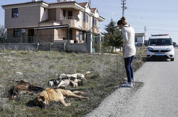Ankara'da yine köpek katliamı!