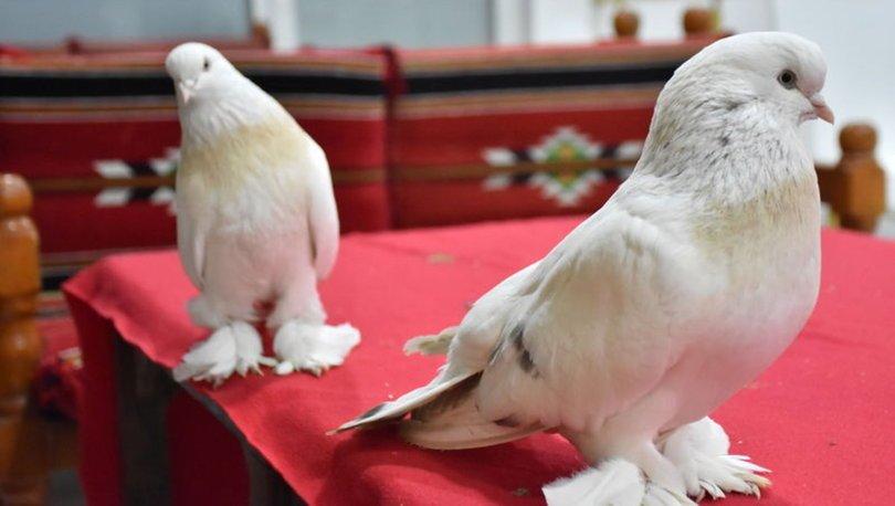 Güvercin yavrusu