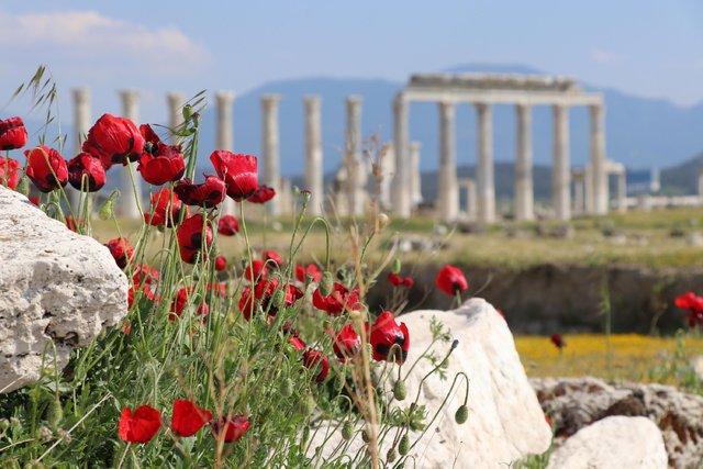 Antik kent Laodikya, kır çiçekleriyle rengarenk