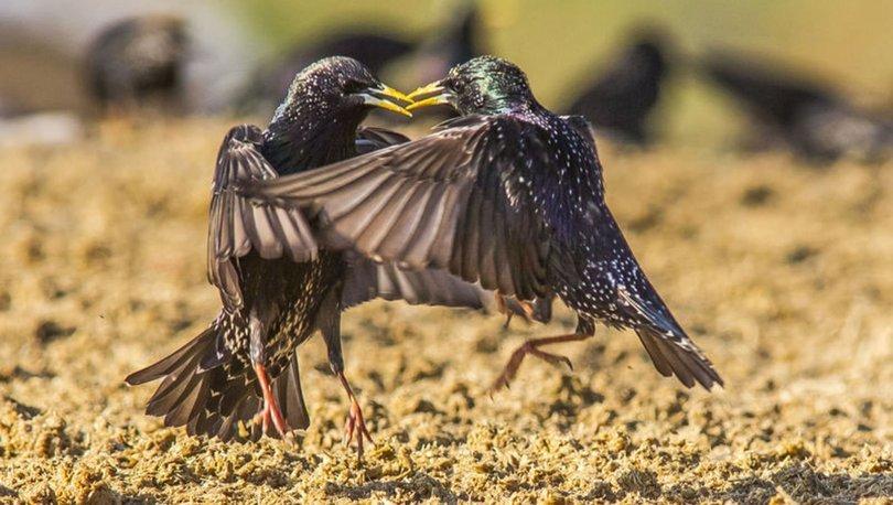 Yırtıcı kuşlar
