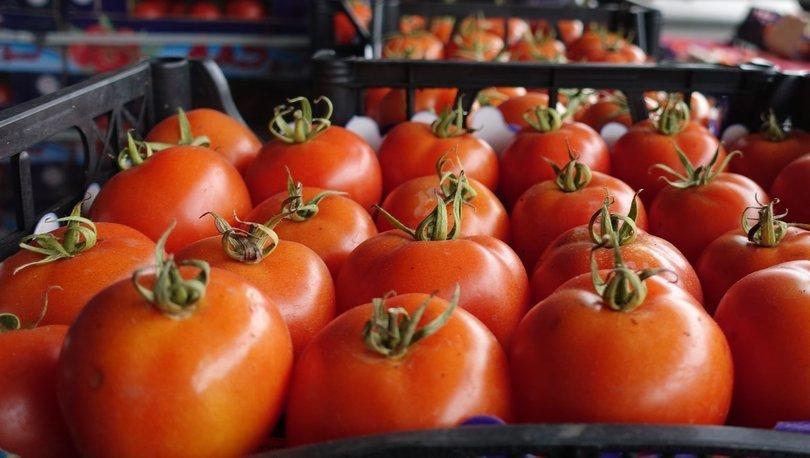 domates ihracatı