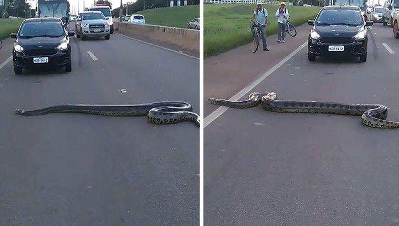 anakonda yılanı