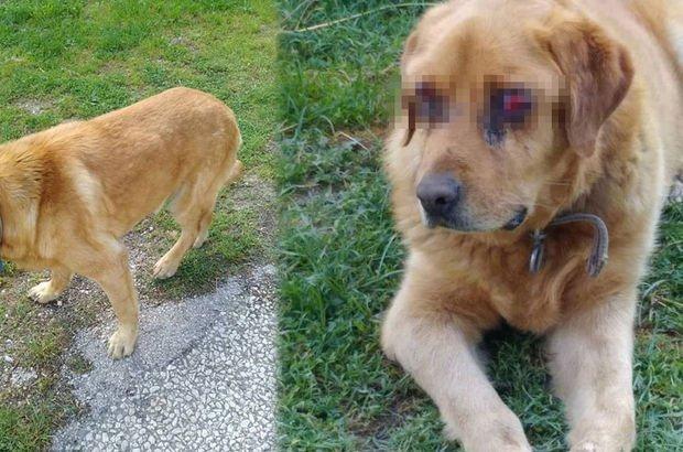O köpekle ilgili gerçek ortaya çıktı