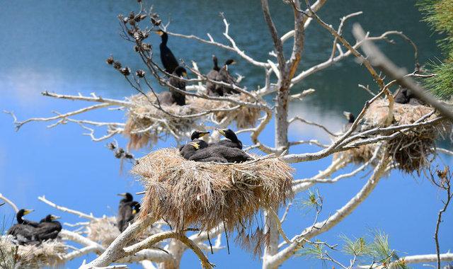 Saklı cennet'te kuş sayısında rekor artış