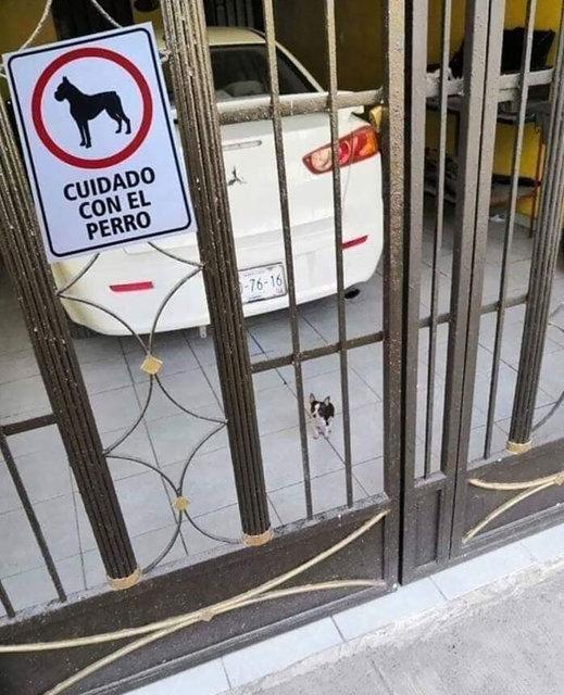 'Dikkat köpek var!' tabelasıyla poz veren köpekler güldürdü