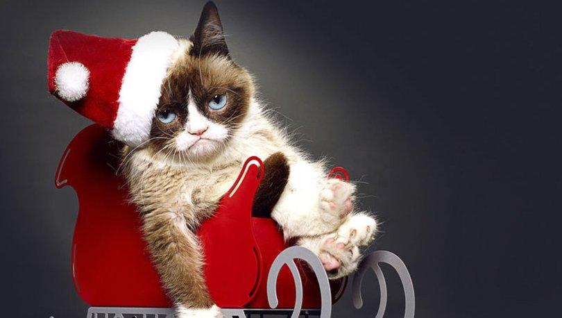 Huysuz Kedi